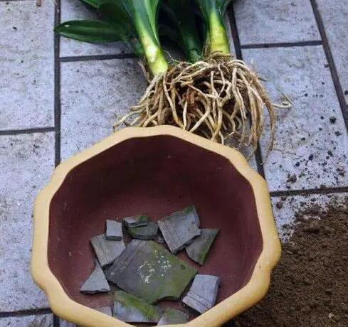 种植盆栽怎样防止积水烂根?只需垫上这些小东西即可搞定