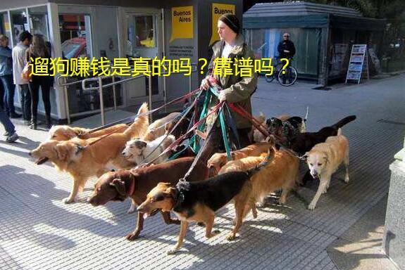 遛狗赚钱是真的吗?靠谱吗?