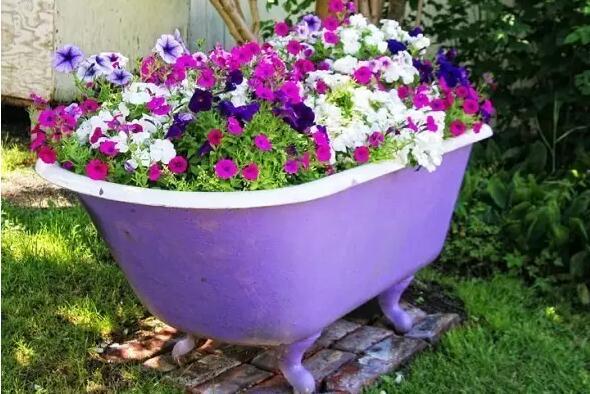 阳台盆栽种什么比较好养?这九种植物非常适合阳台种植