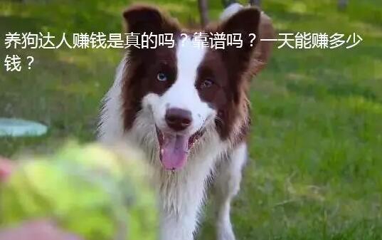 养狗达人怎么样?一天能赚多少钱?